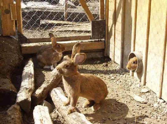 Кролики разведение в домашних условиях поилки