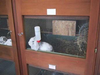 - kanin-peter-issler-2