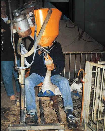 assume heartless simply ignorant foie gras